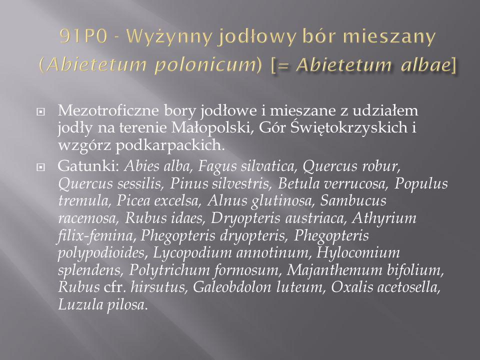 91P0 - Wyżynny jodłowy bór mieszany (Abietetum polonicum) [= Abietetum albae]